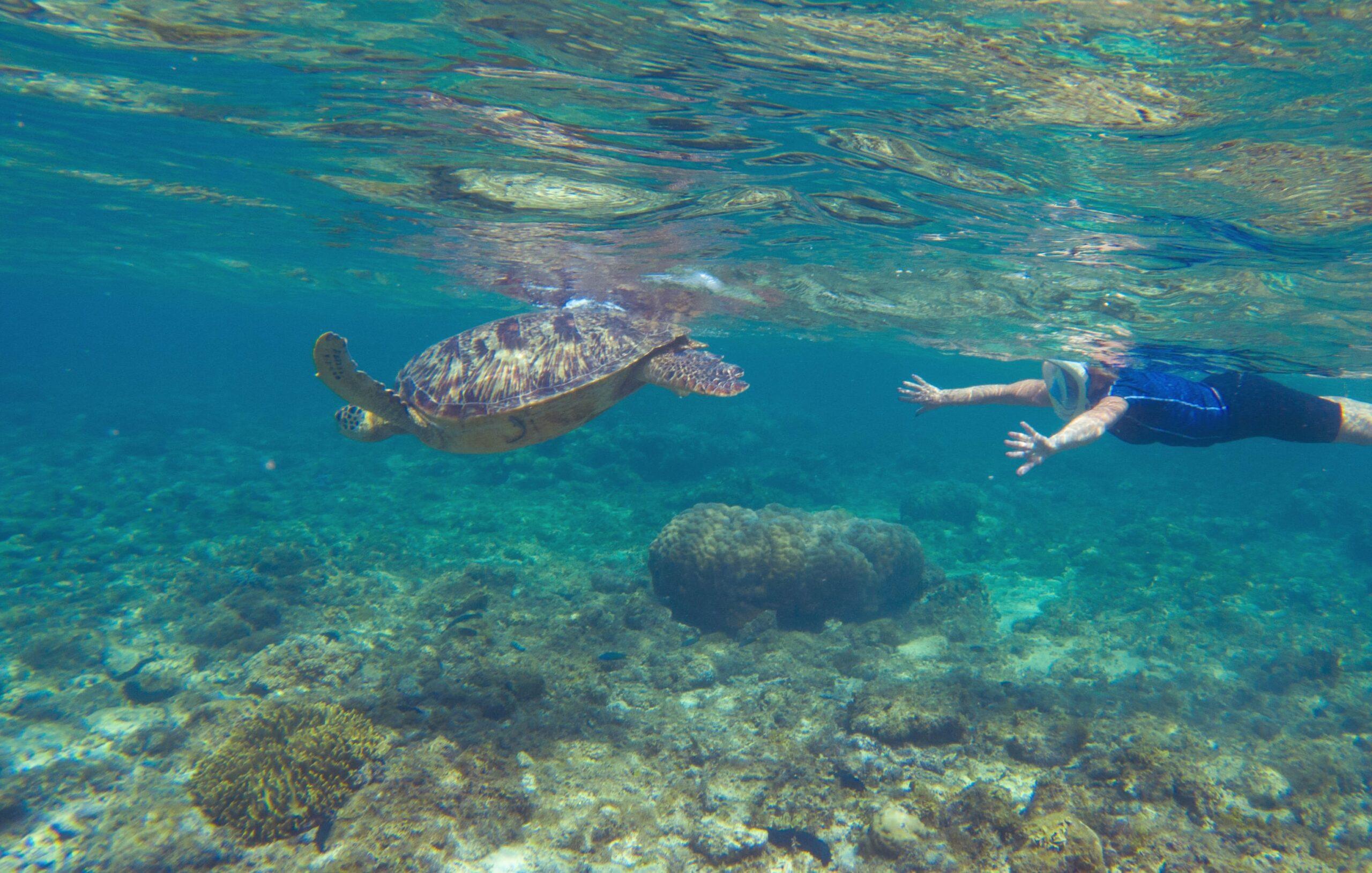 Mergulho em Bombinhas – Belem Viagens – Turismo em Bombinhas, Santa  Catarina – Brasil